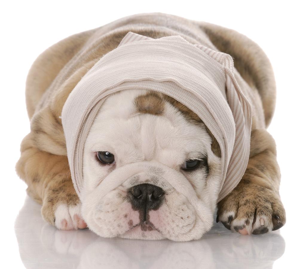 medicinali-veterinari-parafarmacia
